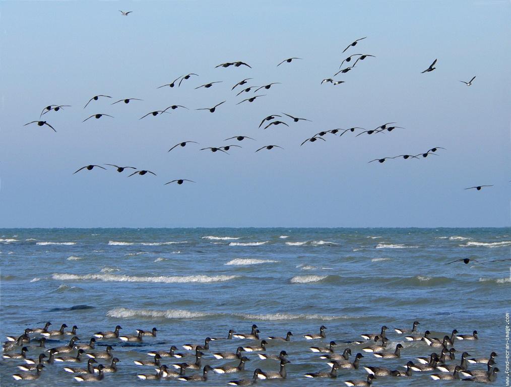 Ile aux oiseaux