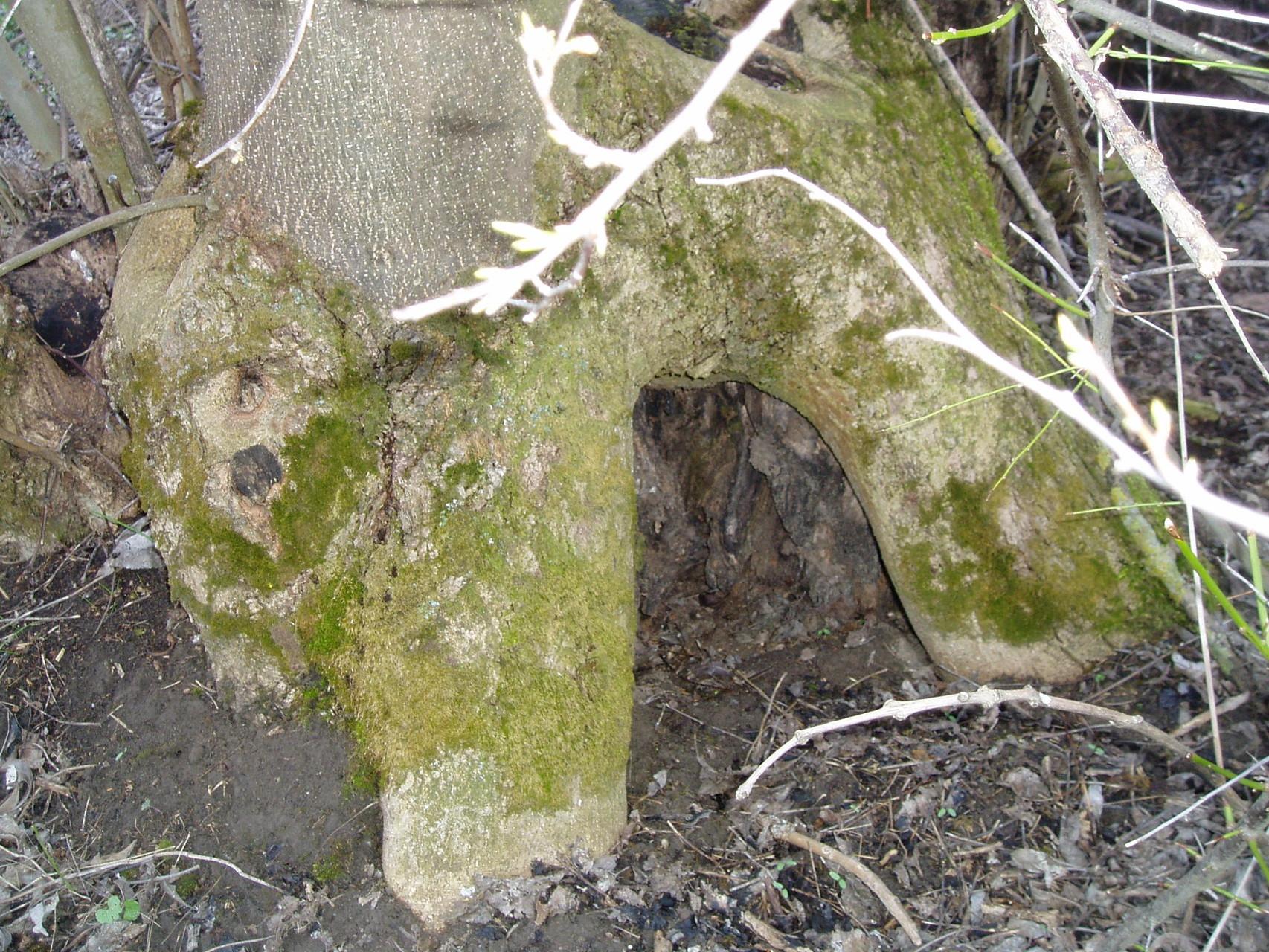 Höhle für die Waldwesen im Fuß der Bäume
