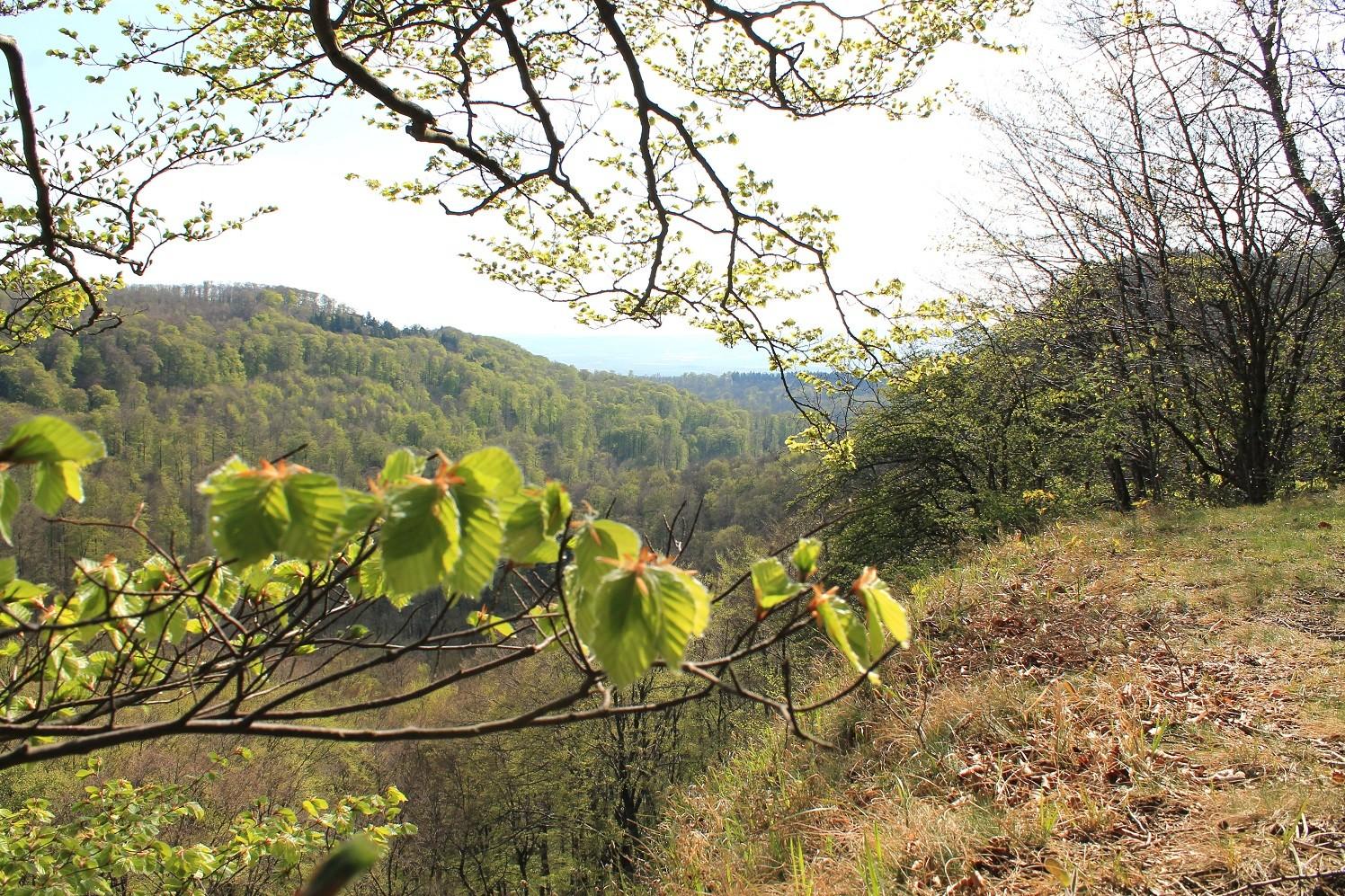 Südwehe Blick ins Tal