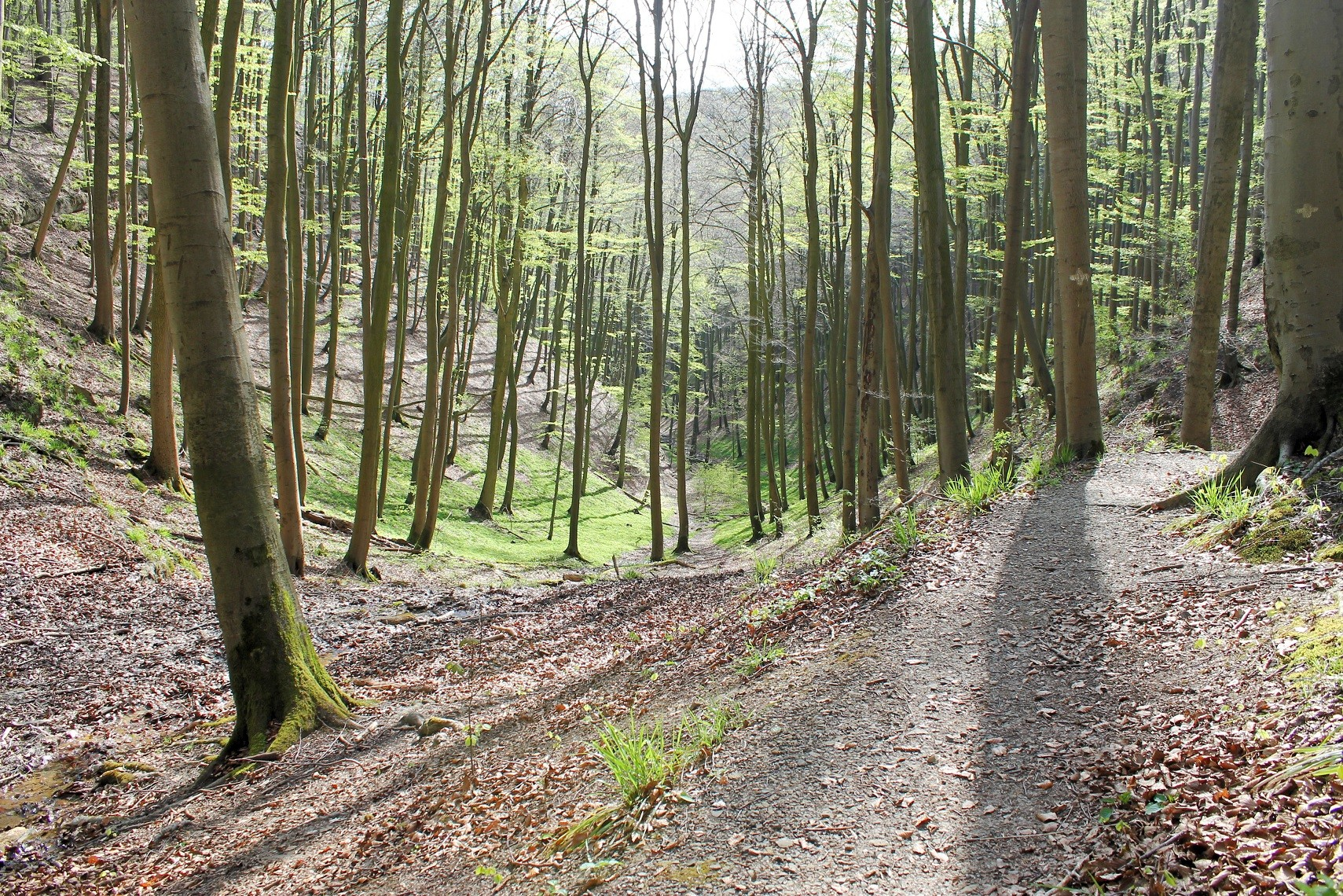 Trail ins Blutbachtal