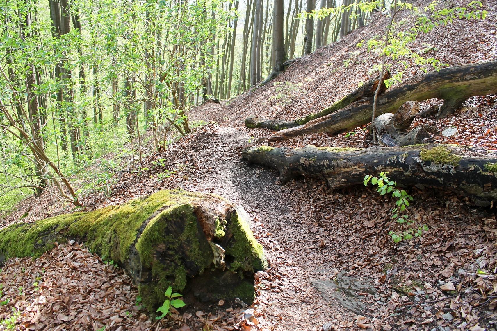 Trail hinauf