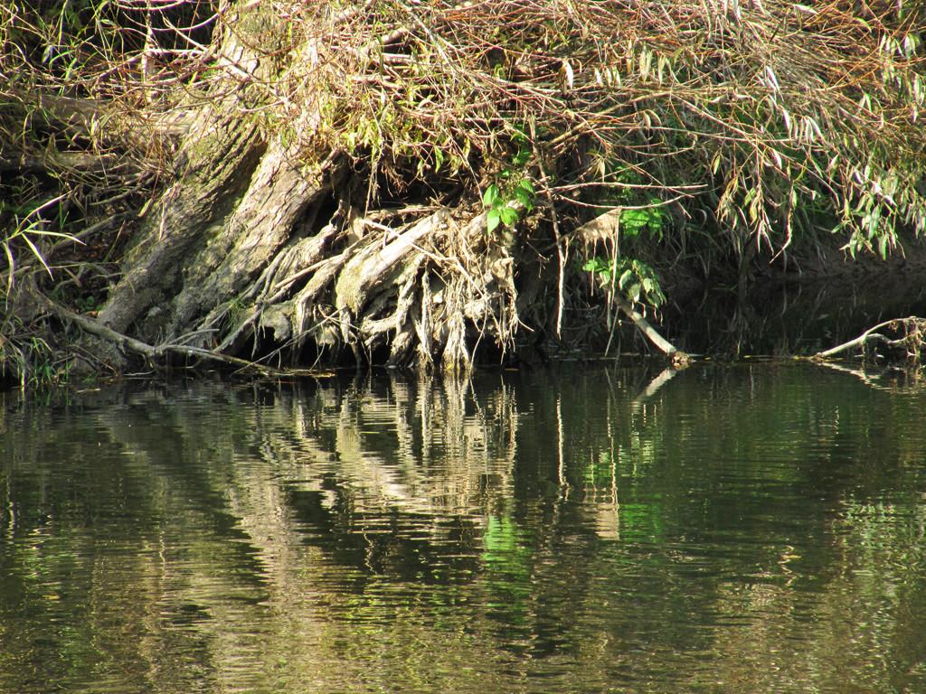 unterspültes Ufer