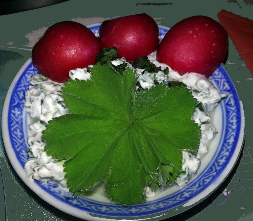 Frauenmantel Frischkäse mit gemischten Wildkräutern und frische Radieschen