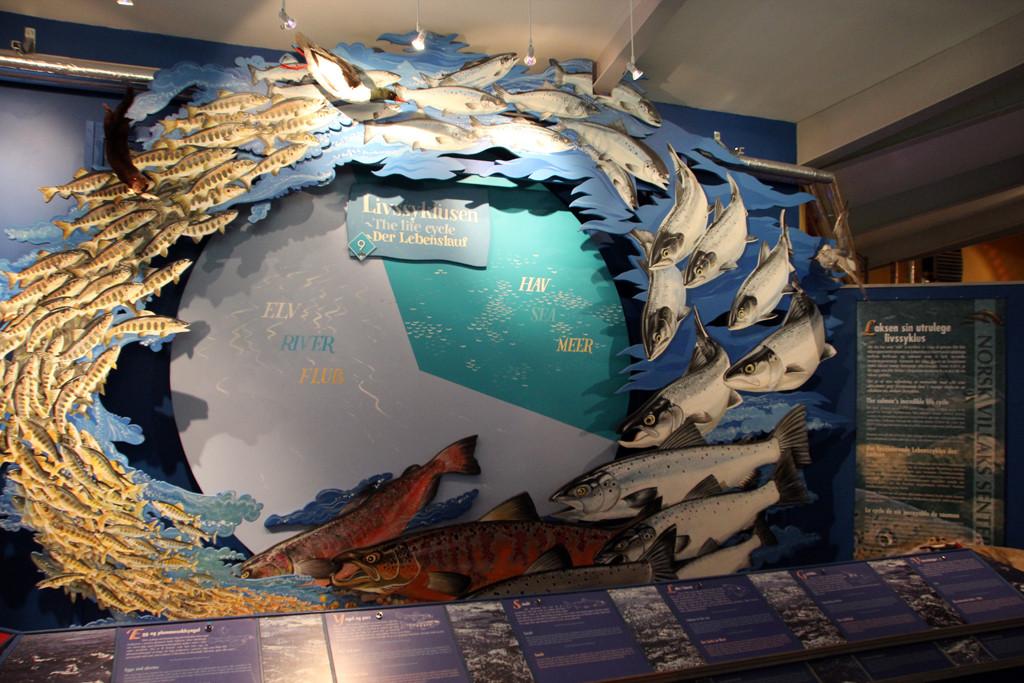 Kreislauf und Wanderung der Lachse