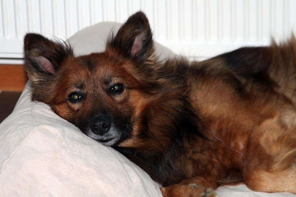 Eddy, 6-8 Jahre jung, nach mehreren Bänder-OPs nicht belastbar
