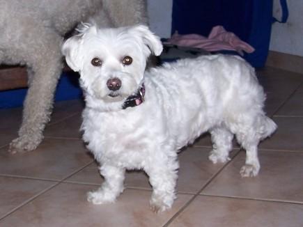 Püppi, 9 Jahre alt