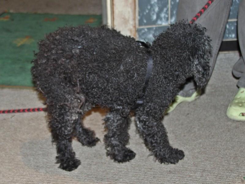 Theo, ca. 10-11, sehr dünn, fast blind, sehr lieb