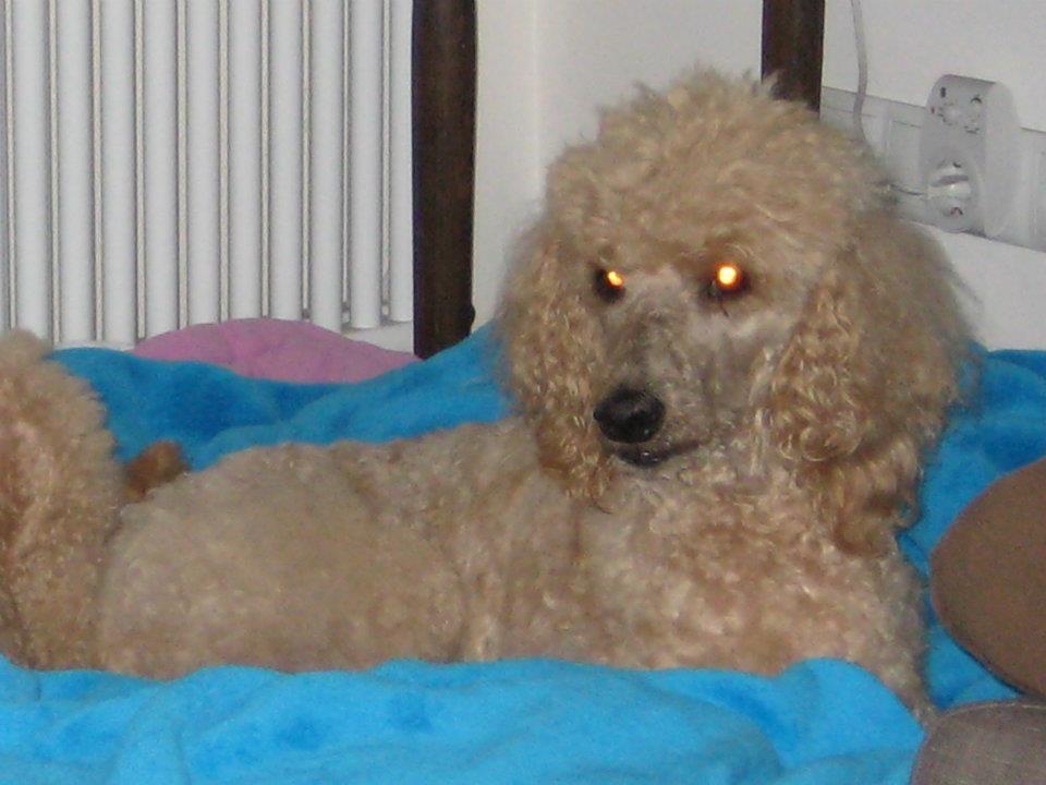 Elsa - gestorben 13.01.2012