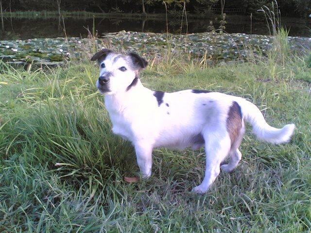 Bennie - gestorben 21.02.2012