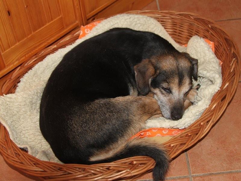 Kessie - gestorben 26.03.2012