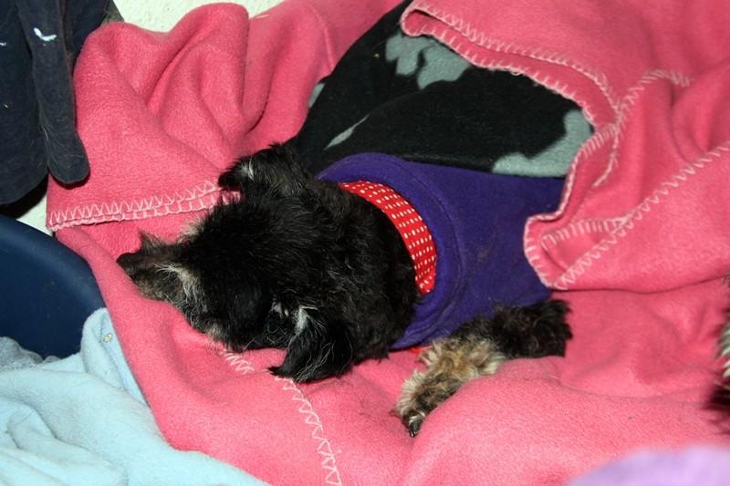 Kessie - gestorben 15.11.2013