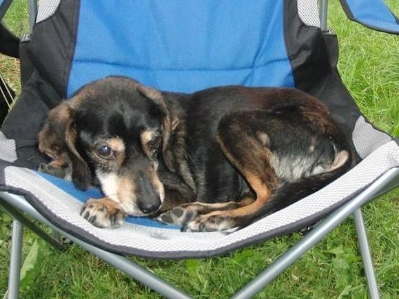 Daisy - gestorben 06.08.2012