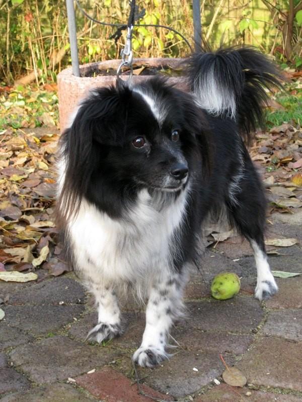 Lucci - gestorben 11.12.2012