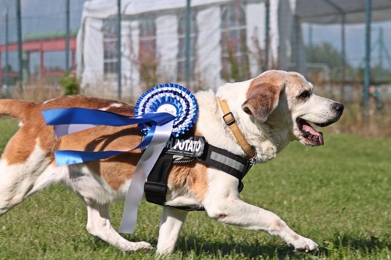 Er spielt Treibball, hat Spaß am Leben und ist ein glücklicher Hund.