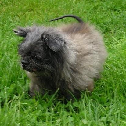 Manni - gestorben 08.08.2011
