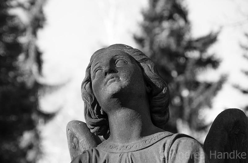 Dresden, Trinitatisfriedhof