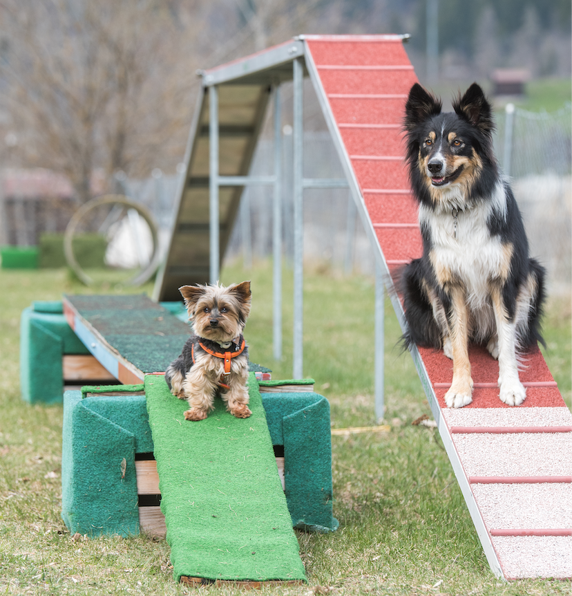 6. Mobility Anlass Hundesport Goms