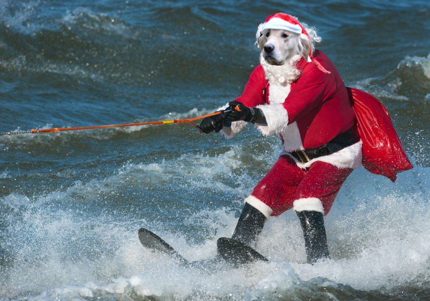 Doggy Christmas Waterski