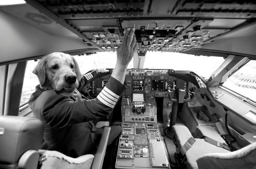 (Käpt'n) Doggy Airlines - Der Pilot, dem Passagiere vertrauen