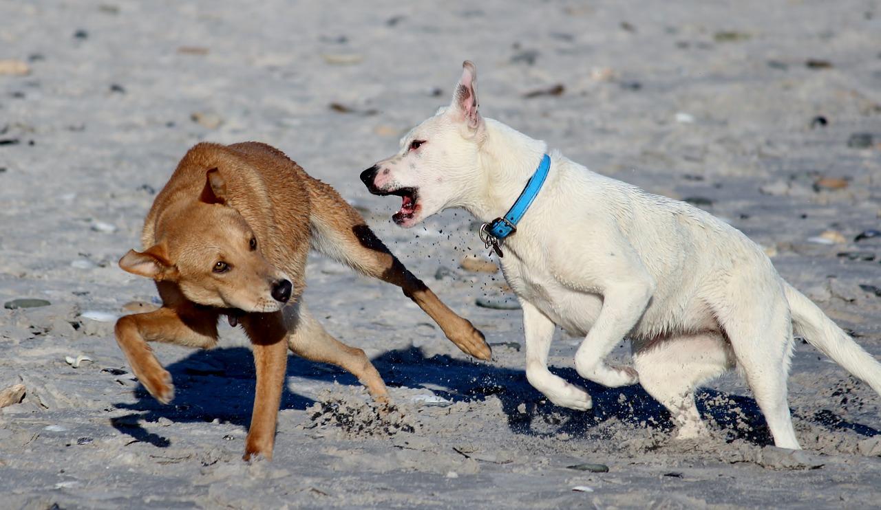 Der Hundebiss und seine Rechtsfolgen