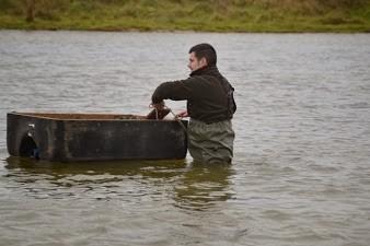 """Opération de retrait des canards """"appelants"""" du plan d'eau"""