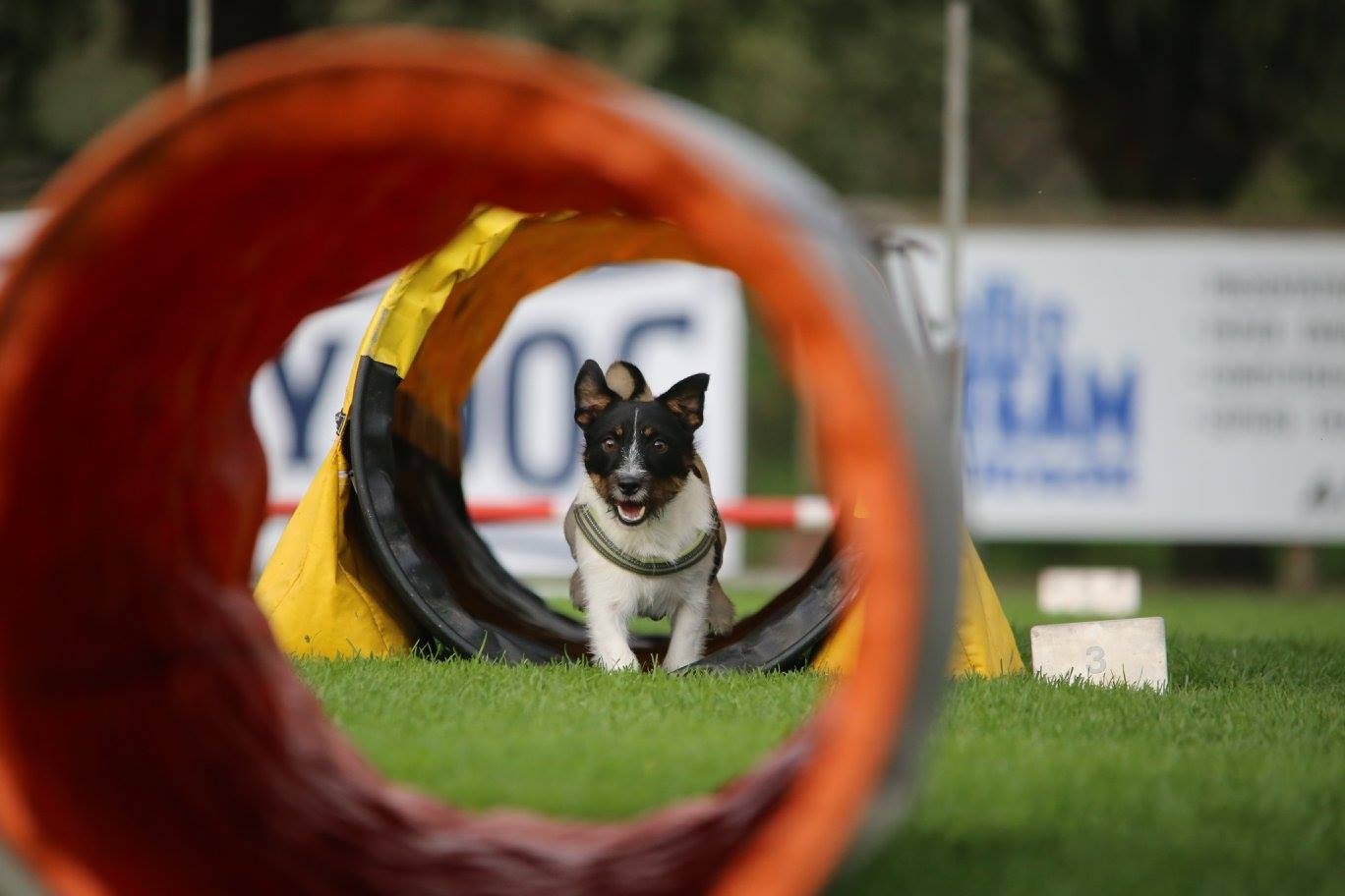 Agility Workshop
