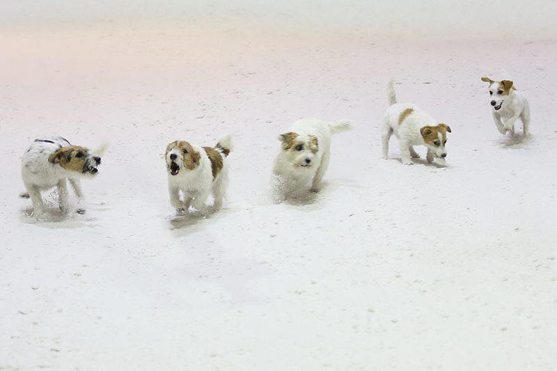 Sneeuwpret bij Snowplanet