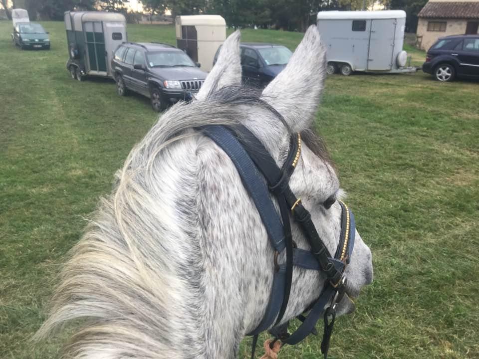 Garbi mon cheval de tête