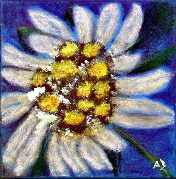 Edelweiss-Mischtechnikmalerei-Pastellkreide-Acrylfarbe-Stillleben-Blume-Natur-Pflanze-Edelweissblüte-Mischtechnikgemälde