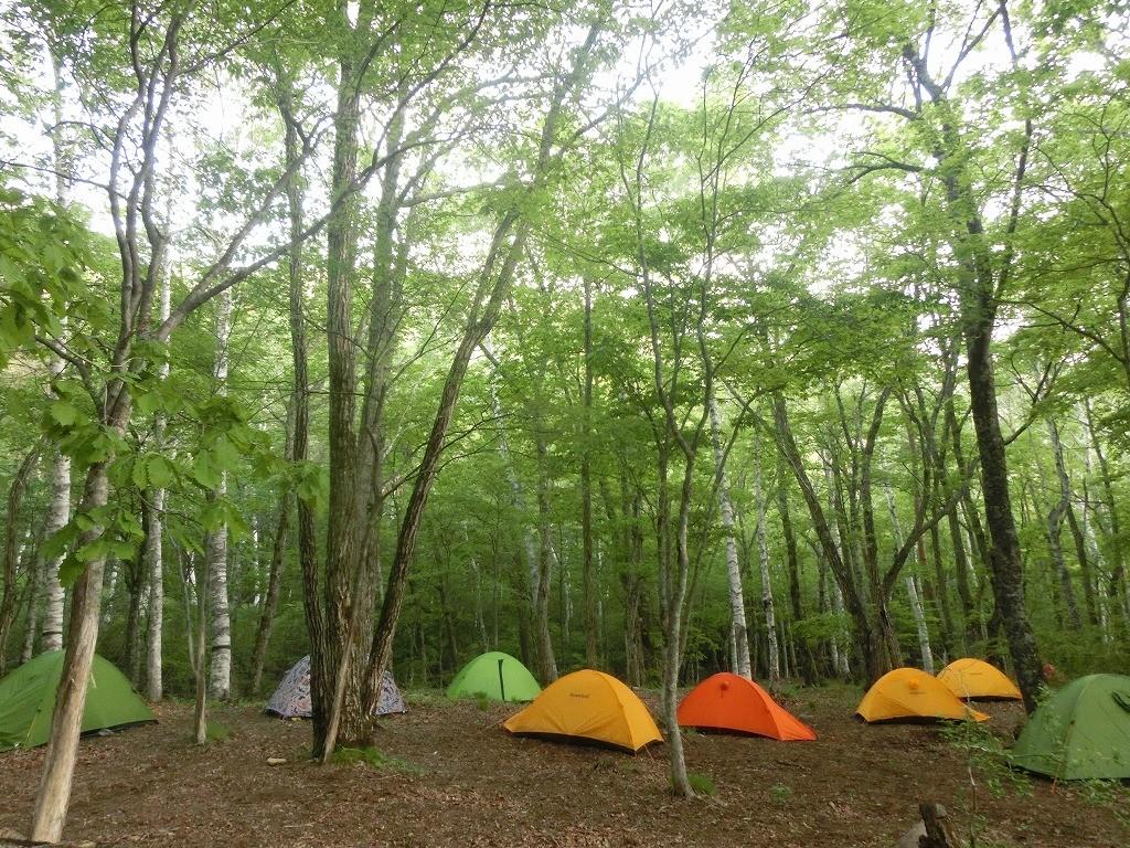 5月 富士山麓 御坂山塊の森林浴トレイル
