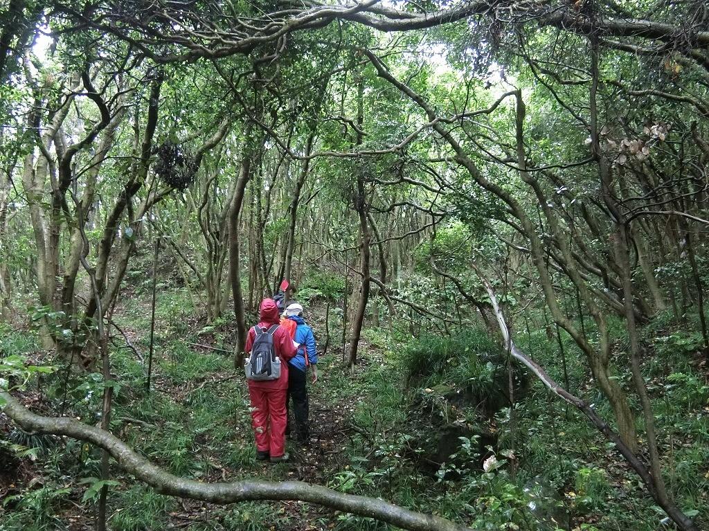 ジャングルや古道も通ります
