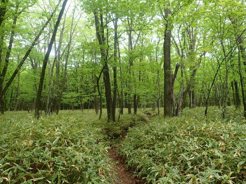 明るい天然林