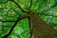 Herzintelligenz versprühen - sein wie ein gesunder Wald