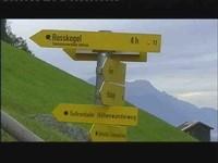 Alpen-(Schilder)wald