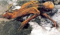 So wurde Ötzi im Eis gefunden