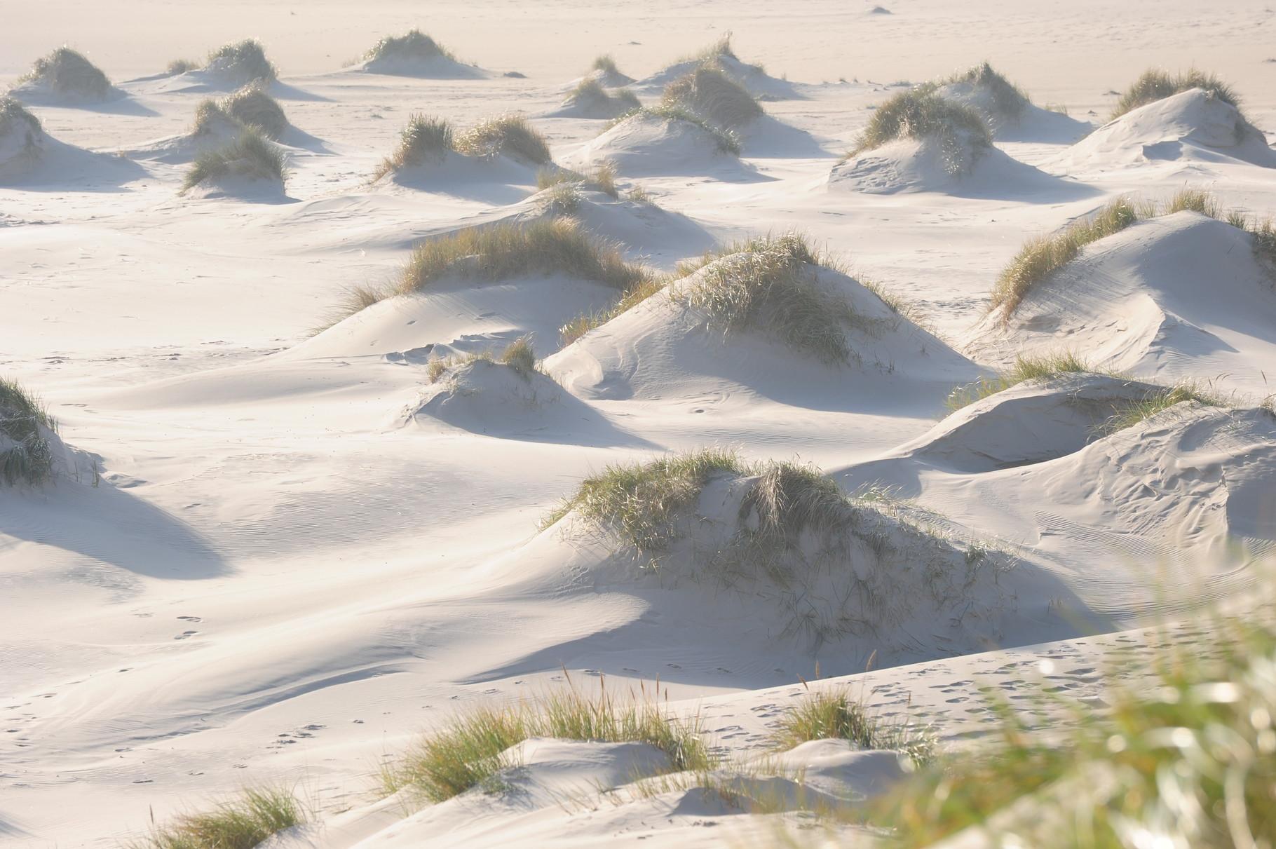 Dünenlandschaften bei Wittdün