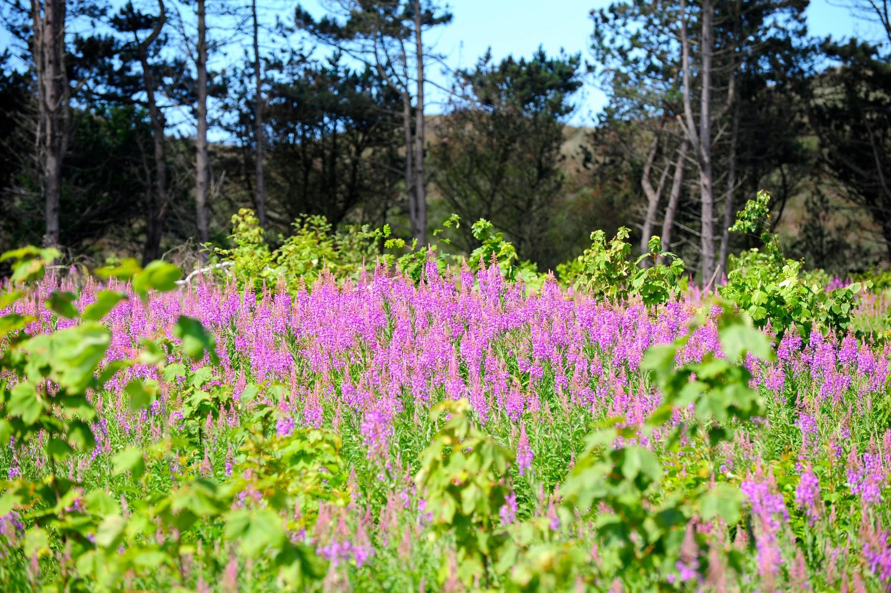 Blütenpracht am Waldesrand