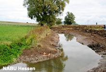 Lamperthäuser Teich, Ohmbecken - Foto: NABU Hessen