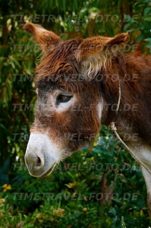 Esel. Foto: Esther Knipschild