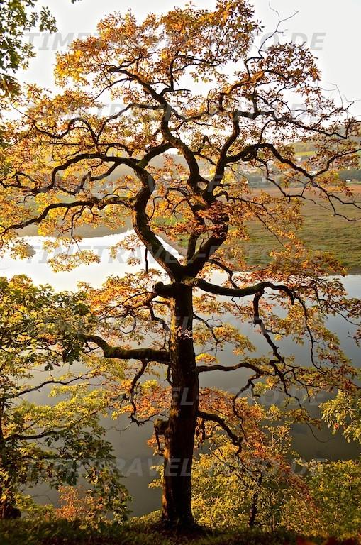 Herbst. Foto: Esther Knipschild