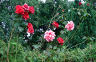 Grabbepflanzung im Wandel der Jahreszeiten