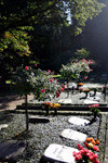 Der Parkfriedhof Ohlsdorf
