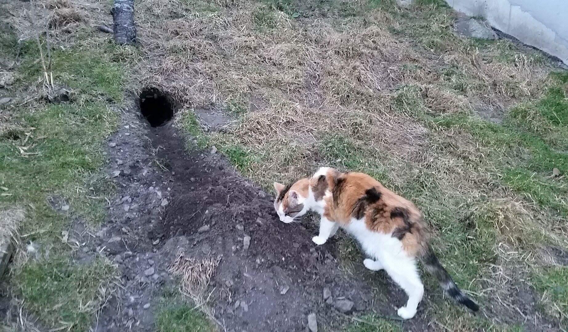 Was haben die Hasen da gebuddelt?