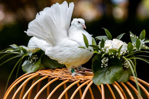 Tauben Hochzeit Dresden, Fotos, Bilder, Fotografen