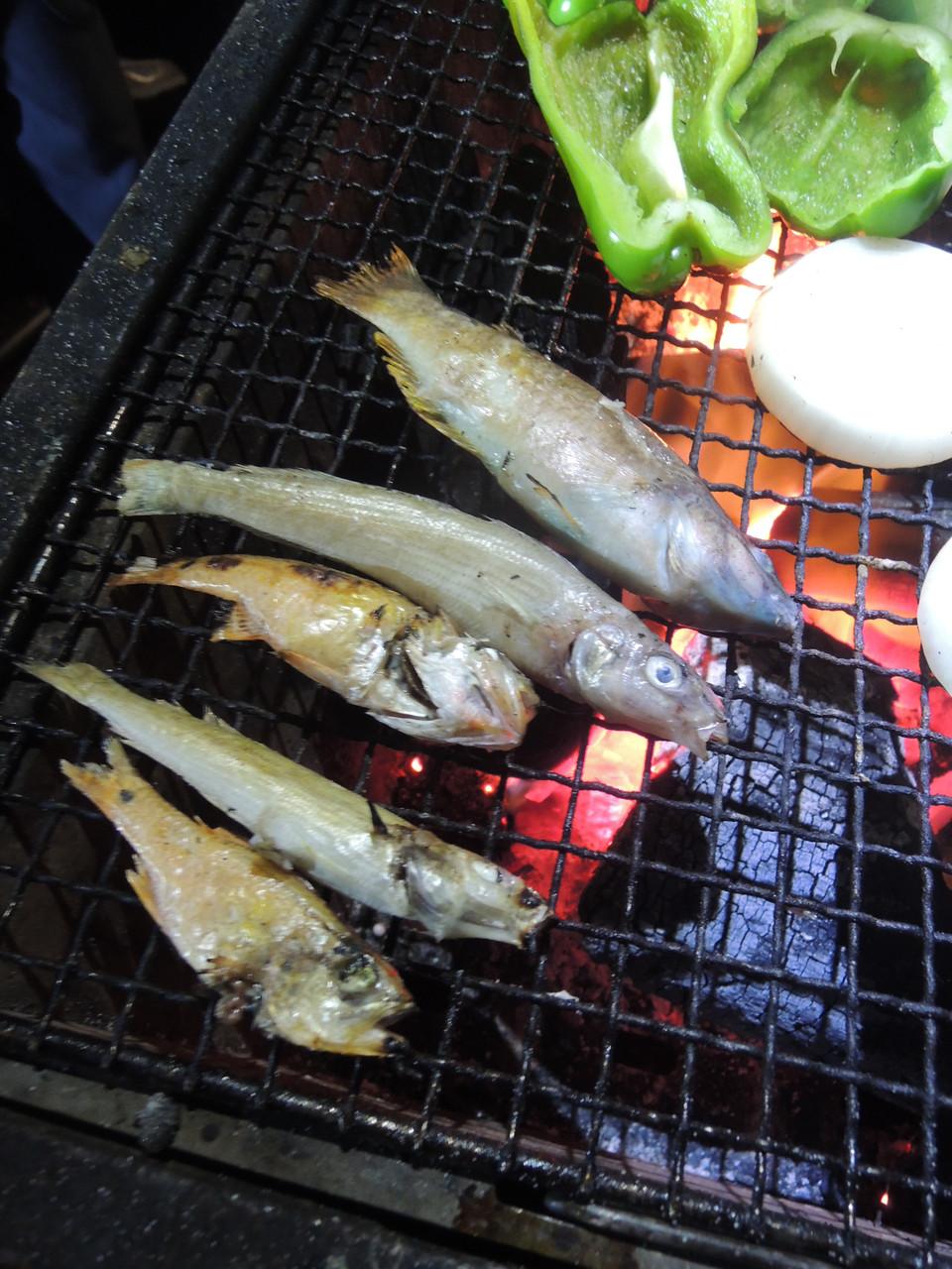 釣った魚も焼き、豪華BBQ