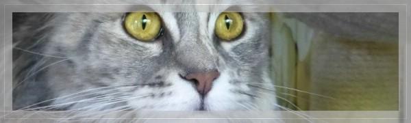 Antobo's Chloe *03.08.2015
