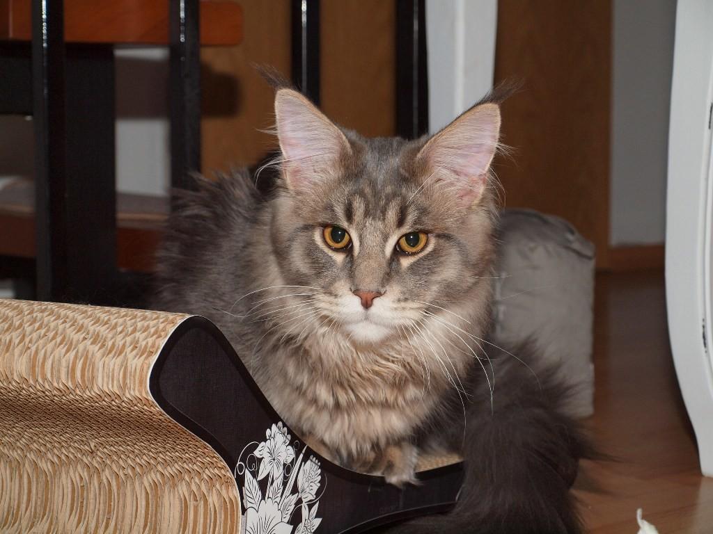 Lou (Cougar), 6,5 Mon.
