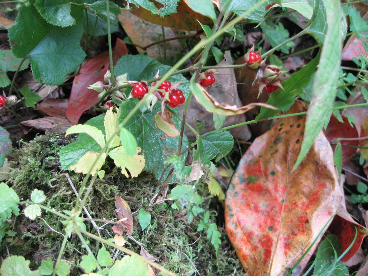 ❦ 紅葉と野いちご