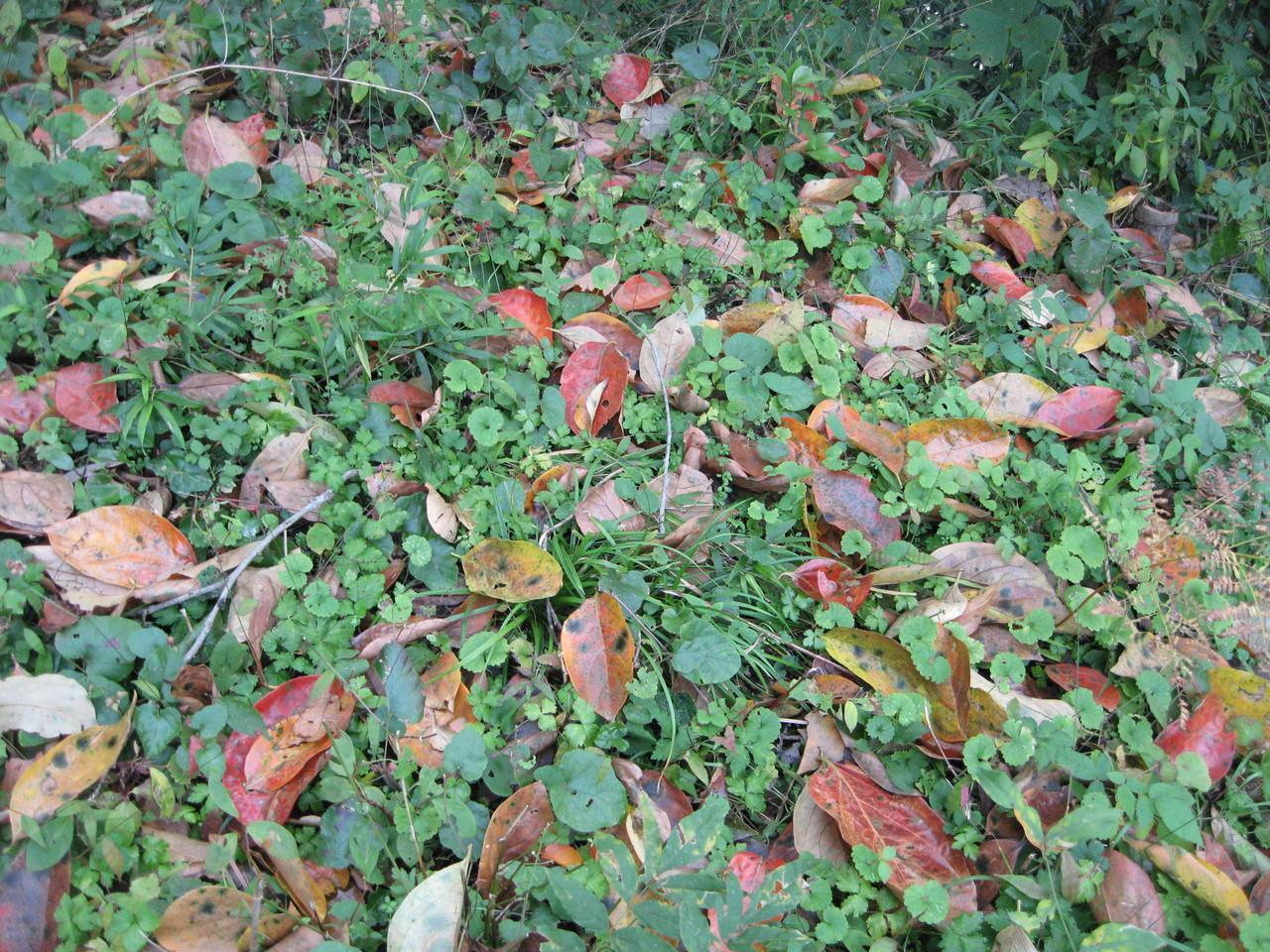 ❦ 秋の紅葉路