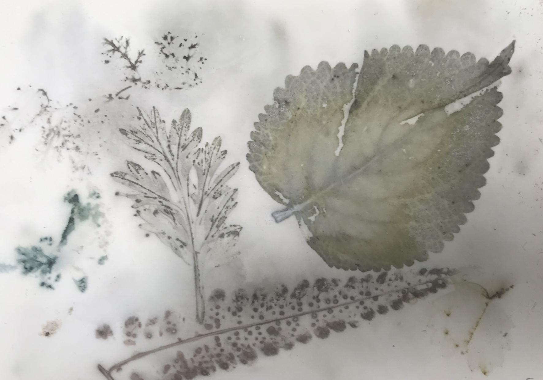 Une impression végétale de Sylvie Carlier